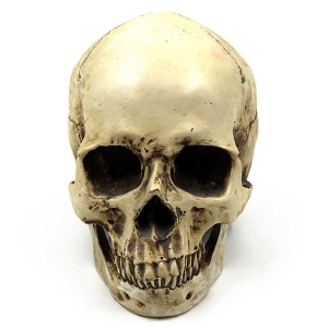 Horror Skull Prop Halloween Party Decoration Supply -