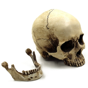 Horreur Décoration Skull Halloween Party Prop -