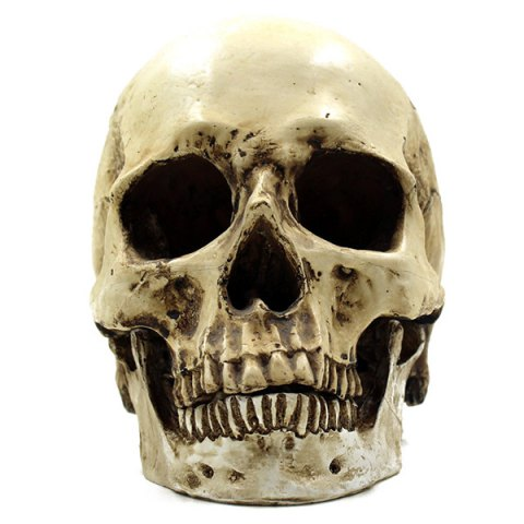 Horreur Décoration Skull Halloween Party Prop