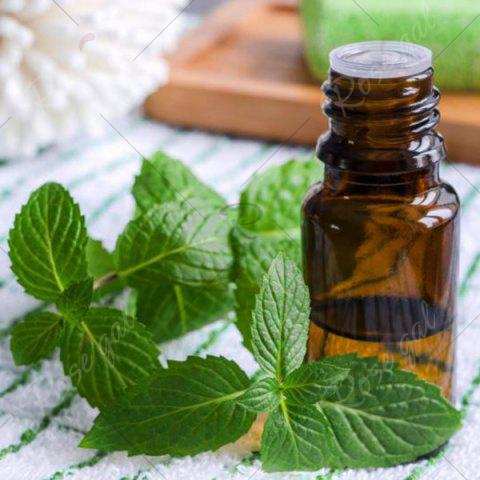 Outfits 10ml Premium Therapeutic Peppermint Aromatherapy Essential Oil - GREEN  Mobile