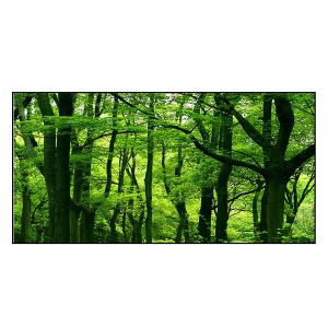 Forest Scenery Print Polyester Soft Bath Towel - GREEN W15.5 INCH * L67 INCH