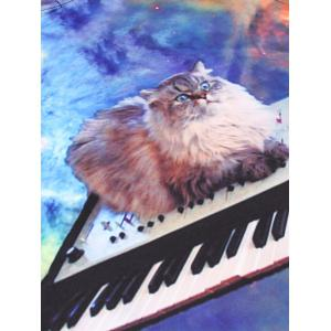 Crew Neck 3D Kitten Electronic Piano Print Sweatshirt -