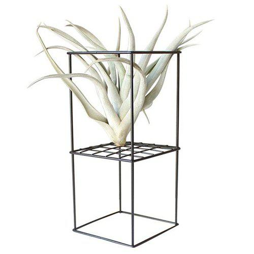 Buy Nordic Style Iron Flower Stand for Air Plant