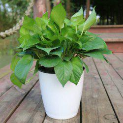 M11 White Creative Automatic Water Absorption Lazy Flower Pot -