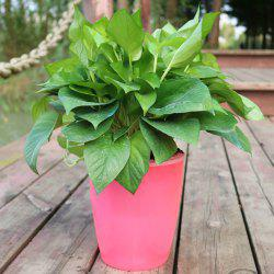 M9 Pink Creative Environmentally Friendly Resin Green Plant Pot -