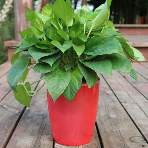 Chic M7 Red Creative Environmentally Friendly Resin Green Plant Pot