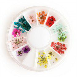1 Box Mixed Style Natural Dried Flower Nail Art Decoration -