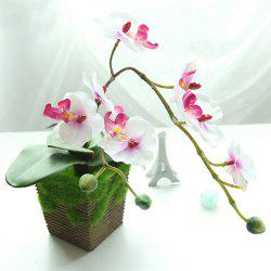 Fleur artificielle d'orchidée de papillon Bonsai -