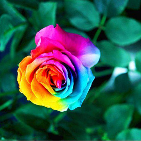 Store 50PCS Rare Rainbow Rose Flower Seeds Yard Bonsai Garden Decoration