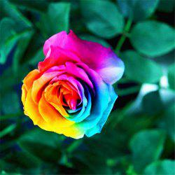 50PCS Rare Rainbow Rose Flower Seeds Yard Bonsai Garden Decoration -